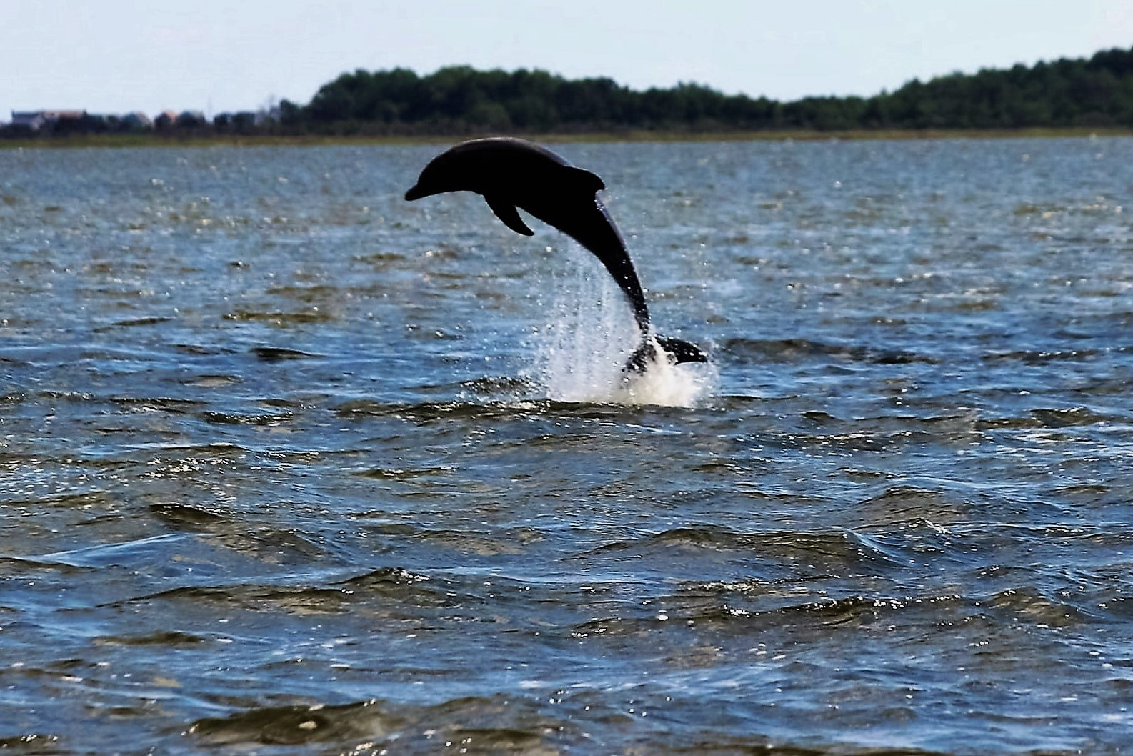 Best Dolphin Tours In Outer Banks