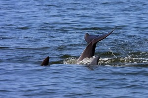 Dolphin tales seen on Paradise Dolphin Cruiises